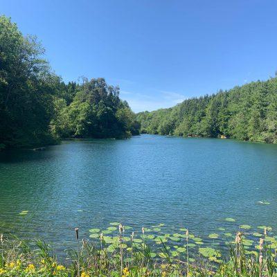 Pond Ripples: Part 2